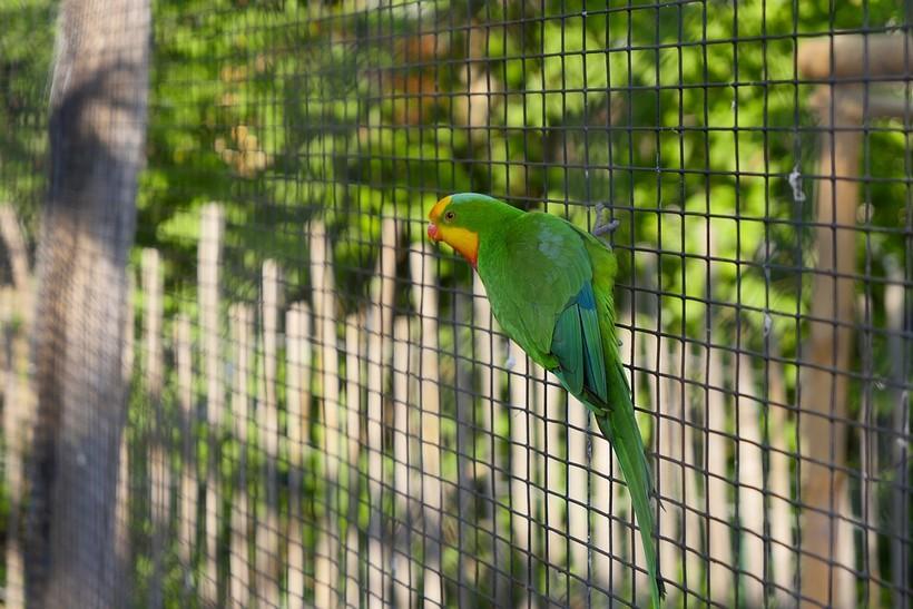 papiga u zoološkom