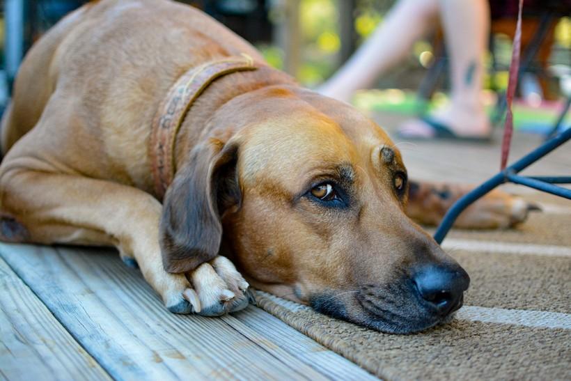 Prijatelji životinja zadovoljni presudom silovatelju psa: 'Sutkinja dosudila maksimalnu kaznu'