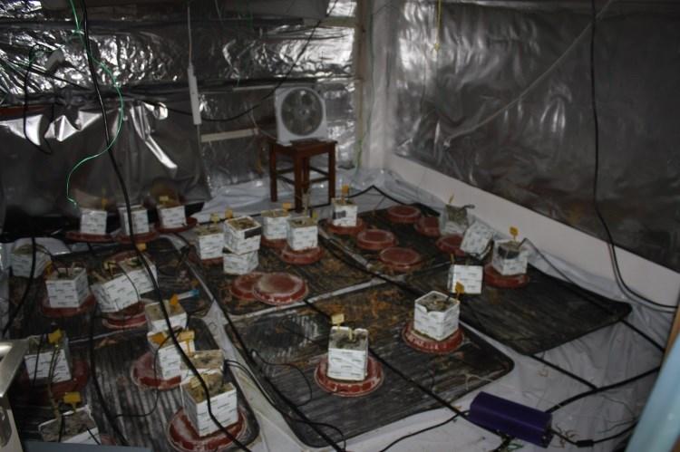trava laboratorij (5)