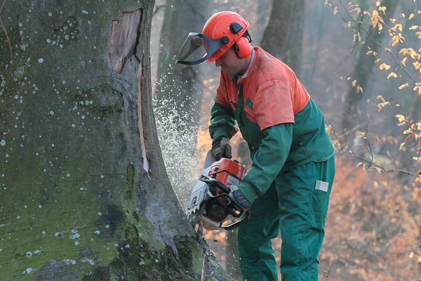 Ured EU javnog tužitelja istražuje prijavu protiv Hrvatskih šuma; nestalo 12 milijuna metara kubika drveta?