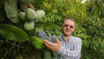[VIDEO] Na farmi u Zagrebačkoj županiji rastu mini lubenice